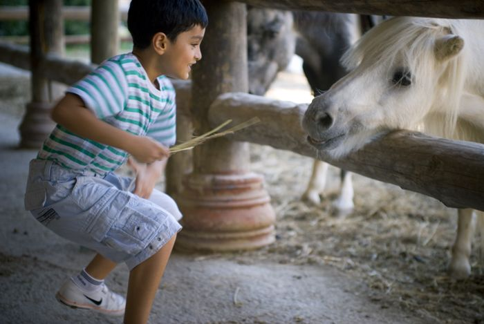 senARTPhotography: CHILDREN AND HORSE