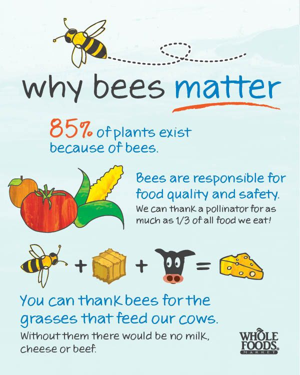 INFOGRAPHIC: Why Bees Matter.