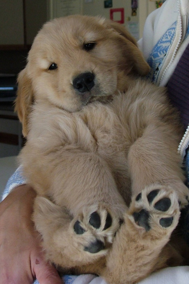 This puppy just makes me want to snuggle!