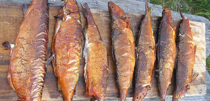 http://www.kalastakalajoella.fi/ Picture: Olli Pirkola #fish #food #sea