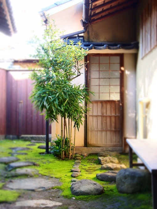 Japanese garden: I want to have stones with moss around it like this.
