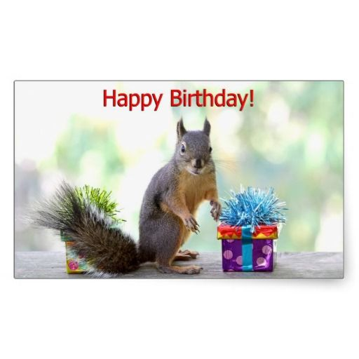 >>>Are you looking for          Happy Birthday Squirrel Stickers           Happy Birthday Squirrel Stickers we are given they also recommend where is the best to buyHow to          Happy Birthday Squirrel Stickers today easy to Shops & Purchase Online - transferred directly secure and trust...Cleck Hot Deals >>> http://www.zazzle.com/happy_birthday_squirrel_stickers-217778679348320289?rf=238627982471231924&zbar=1&tc=terrest