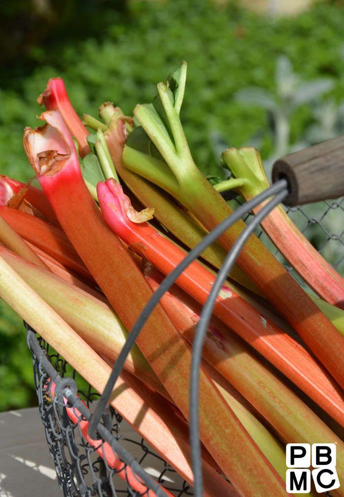 Tarte à la rhubarbe et spéculoos : le bon équilibre sucre-acidité !