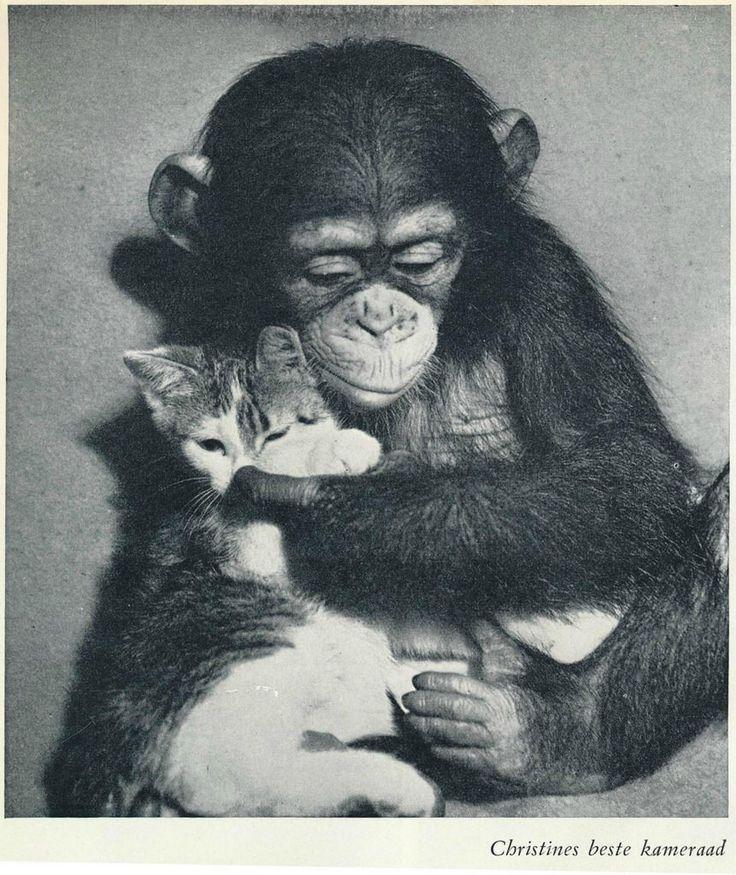 Lilo Hess Cristine de baby chimpansee 1954  ill u