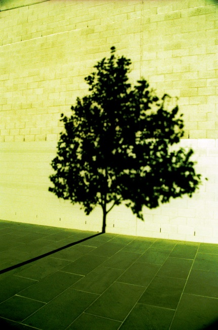 green tree #palm: Green Trees, Trees Shadows, Trees Trees, Paisagens Trees, Trees Palms, Trees On Wall, Trees Lifeinstyl, Solitari Trees, Shadows Trees