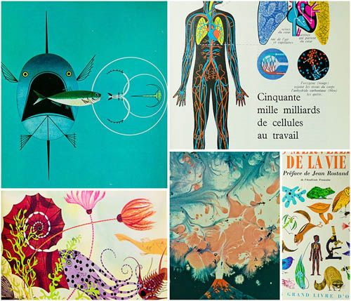 Beautiful illustrations from the Golden Book of Biology, illustrated by Charley Harper: Books Covers, Charley Harper, Biology Books, Amazing Biology, Awesome Biology, Books Illustrations, Colors Illustrations, Bio Books, Golden Books
