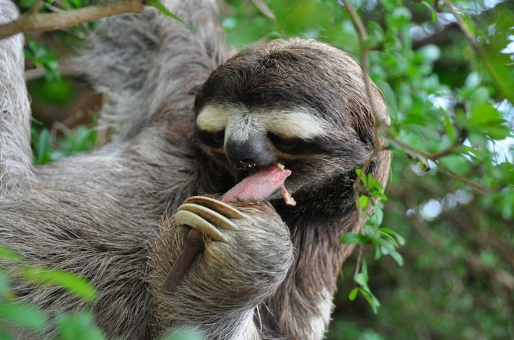 Animals Funny Wallpapers Cute Funny Wallpapers: Cute Sloth Funny Picture HD Wallpaper: Animal Funny Photos