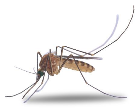 Fort Worth Mama: The World Would Be A Lot Better Place Without MOSQUITOES
