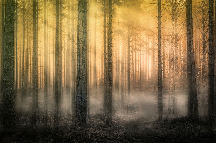 In the Heart of the Misty Forest 2 by Lauri Lohi on 500px