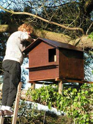 barn owl boxes how to make