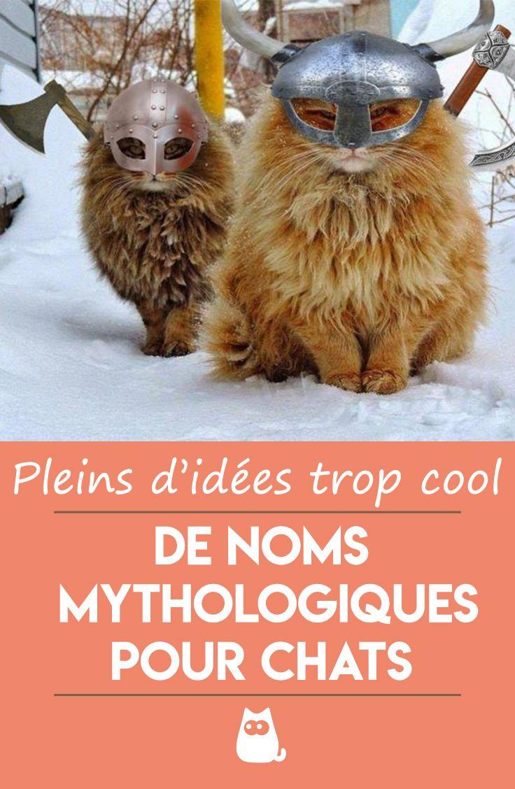 Noms Mythologiques Pour Chats De 80 Idees Noms De Chat Prenom Chat Femelle Chat Femelle