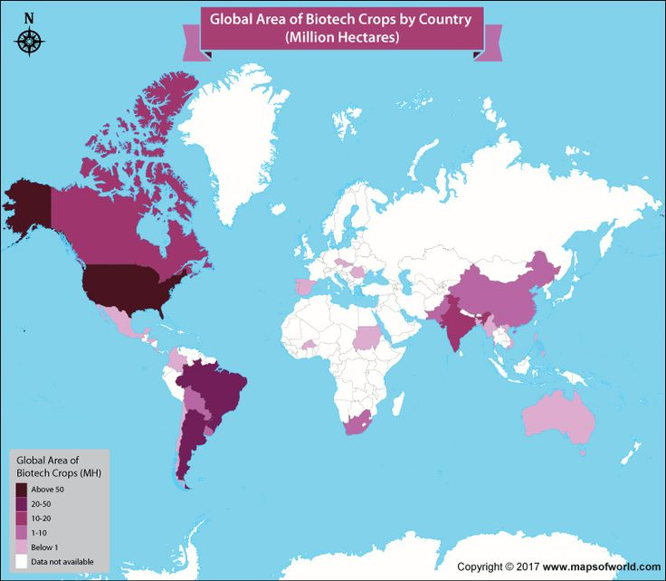63 best world news images on pinterest maps countries and the global hectarage of biotech crops by country on a world map gumiabroncs Image collections