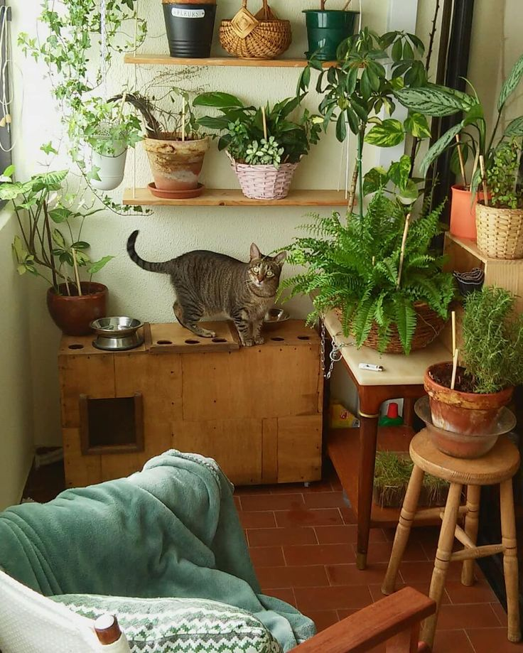 I love you girl!!  my CMYK is the purrrrfect cat. No noise or destruction around her. The house spirit has 4 paws. Home is where she is #homeiswhereyourcatis #cmykthecat #catsofinstagram #cat #odetomycat #fur #gato #balconycats #green #smallgarden  #urbanjungle.