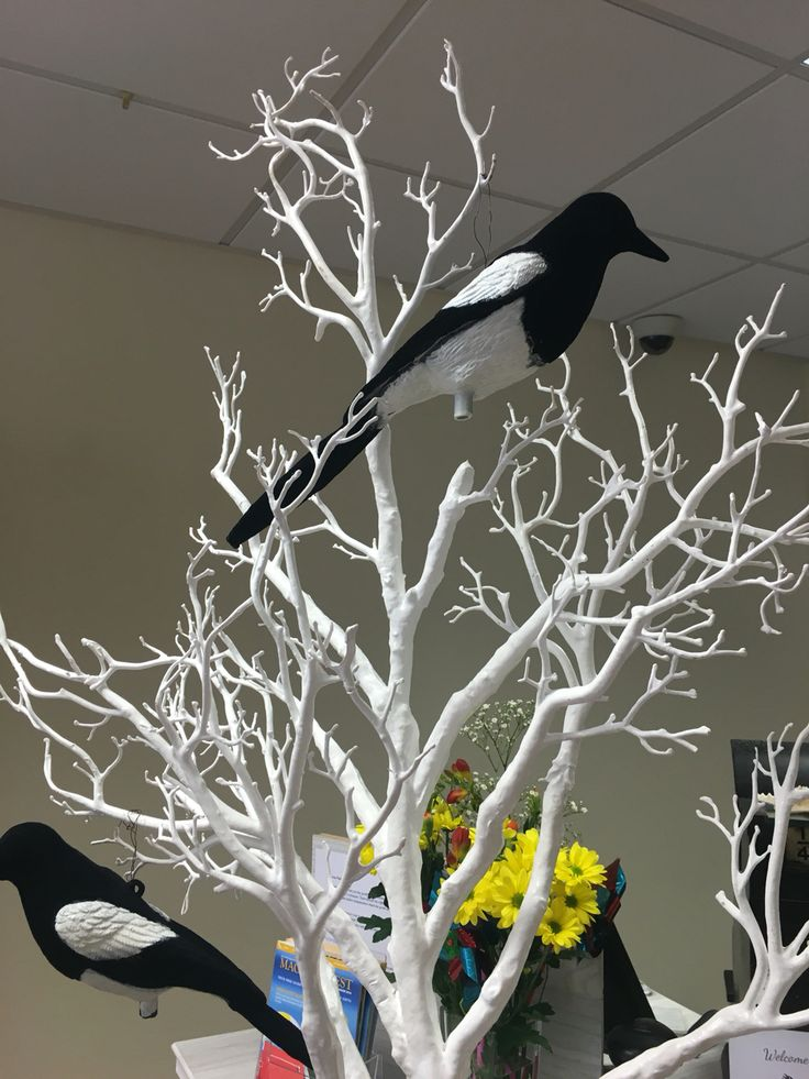 Four magpies sit our gorgeous trees, one for each year we have been open for.