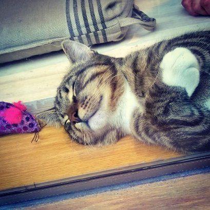 Kissan unta. Dreaming of cats ;)