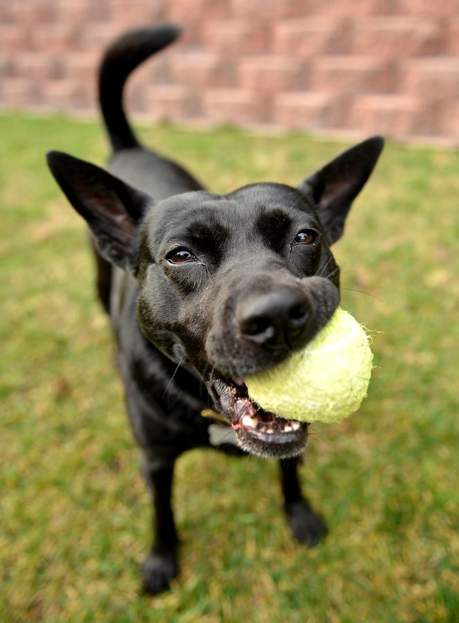 Luna by Josh Norem on 500px This is Luna, she has a boutique named after her in San Francisco. Her favorite thing to do is to nom on this tennis ball.