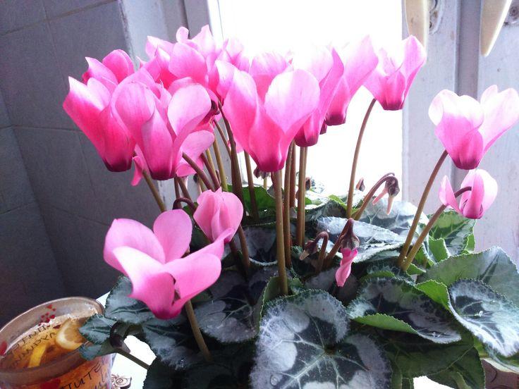 #цветы
