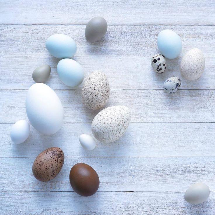 Ostereier gestalten: verschiedene Ei-Sorten