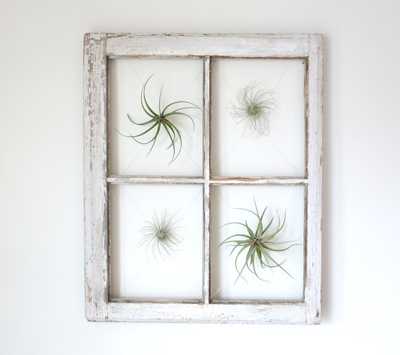 Floating Air Plant Window  made in Brooklyn by RootsinRust on Etsy, $105.00