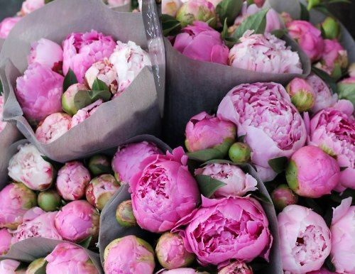 Pink Peonies, had these in my wedding bouquet, love them!!