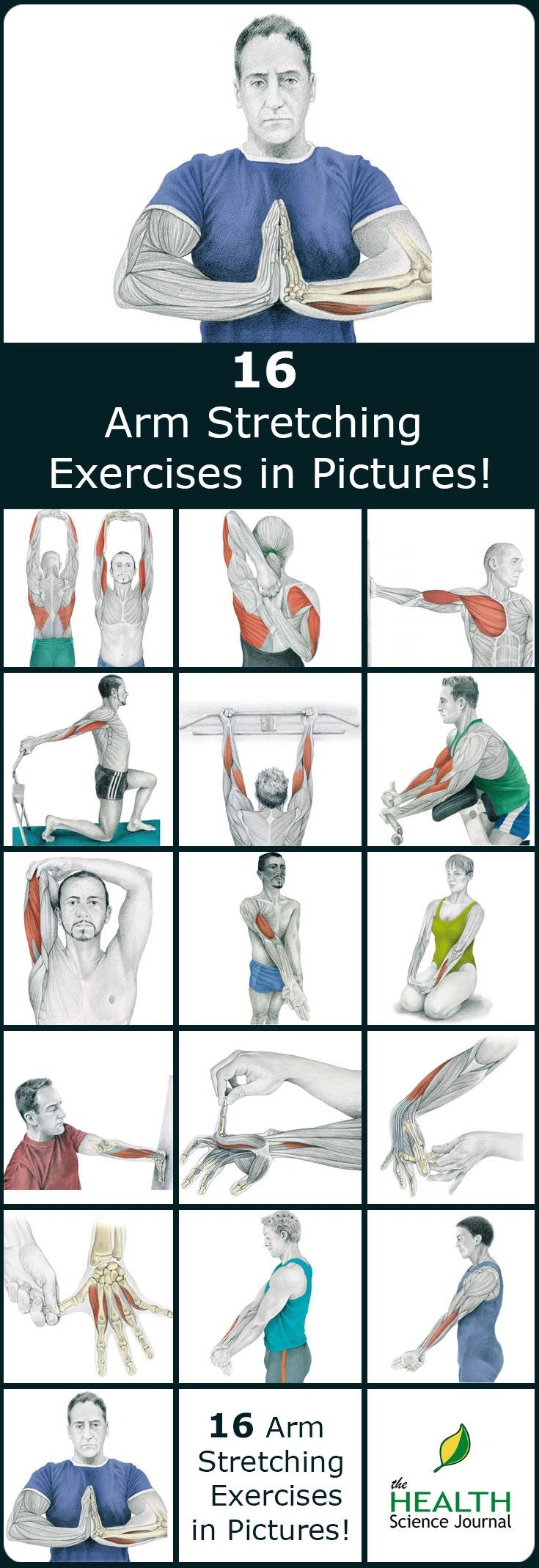 We have a new entry into our stretching series. Today we'll present 16 illustrations of arm stretching exercises, showing you exactly which muscle you are exercising. By demonstrating where on your body you should feel the highest tension, we hope to help you do the exercises properly. Why you should stretch your arms? Just like …