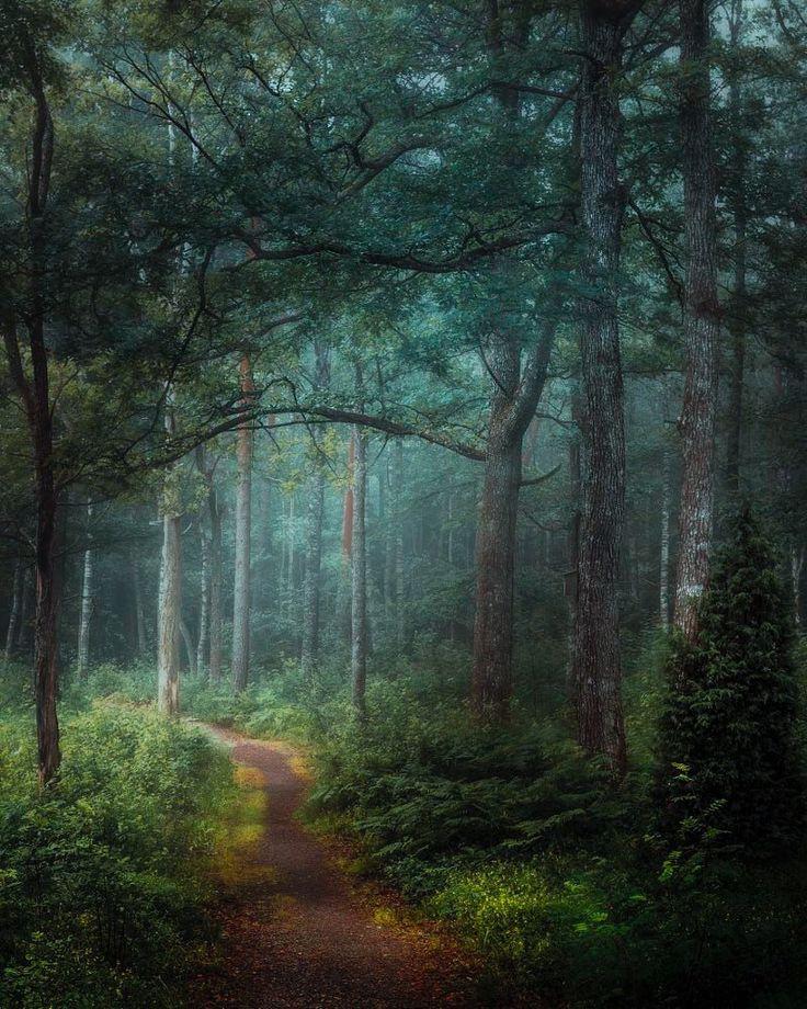 ***Sunlight in the rain by Göran Ebenhart on 500px cr.