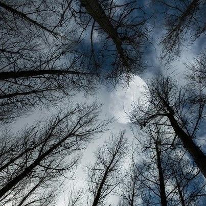 Mi affacciai alla finestra per ammirare il panorama, le luci perimetrali intorno alla casa illuminavano a giorno il cortile, diffondendo un po' di chiarore anche al di là della staccionata, verso il vasto prato. Il resto del paesaggio veniva debolmente rischiarato dalla luna piena, che irradiava la sua luce sulle cime degli alberi regalando a questi bagliori argentei.  C'era una quiete impressionante, sembrava di essere sospesi nel tempo in un mondo ovattato.     Eleonora Della Gatta ©