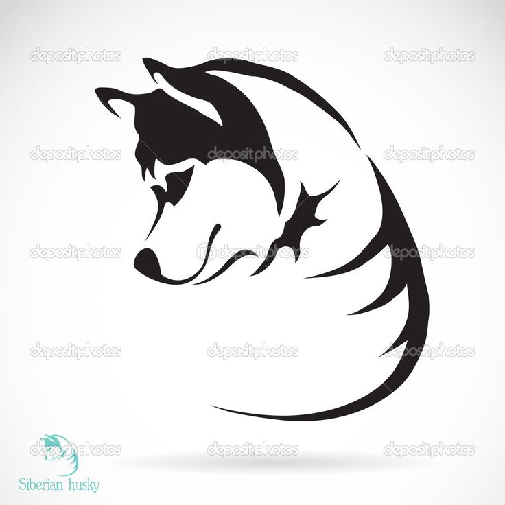Downloaden - Vector afbeelding van een hond Siberische husky op witte achtergrond — Stockillustratie #43465693