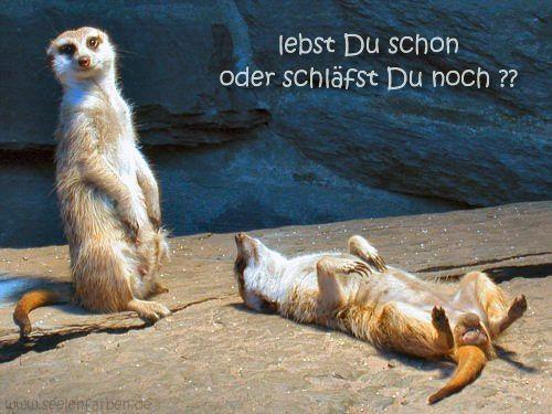 guten morgen zusammen und einen schönen tag - http://guten-morgen-bilder.de/bilder/guten-morgen-zusammen-und-einen-schoenen-tag-91/
