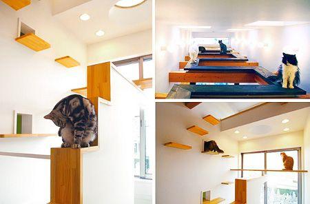 Japanese custom cat-friendly home - from 1389blog.com