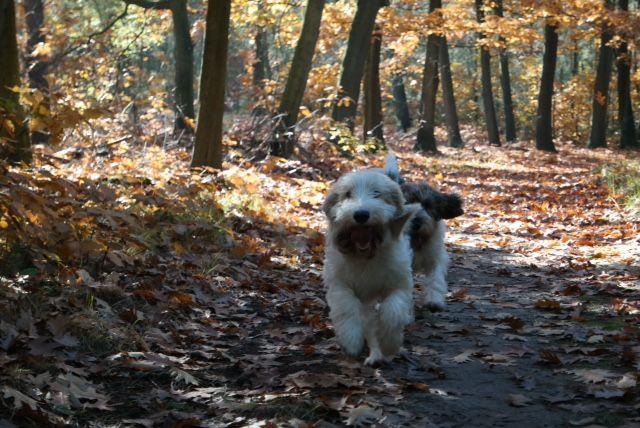 Rennen in het bos #gbgv