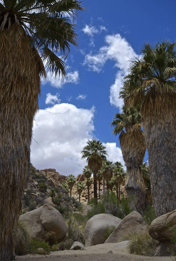 The Lost Palms Oasis, Joshua Tree National Park, California, USA