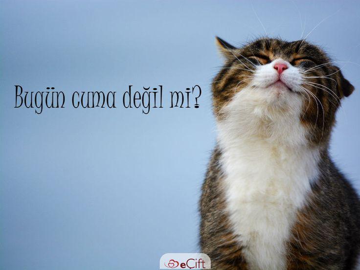 Sabahların en güzeline, tatile en çok yaklaşan güne merhaba :) #cuma #tatil #günaydın #mutlugünler #happyfriday #cat #tgif