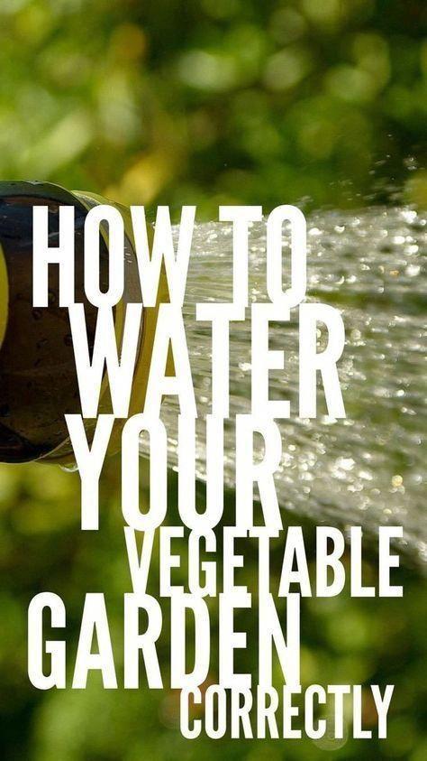 Den Gemüsegarten richtig gießen