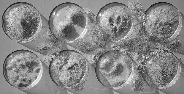 L'artiste Rogan Brown a réalisé pour son dernier projet, Outbreak, une série explorant, comme il le décrit, « la sublime microbiologie ».