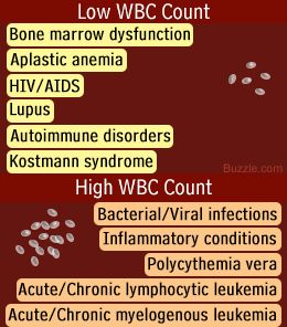 White Blood Cells: Diseases and Disorders