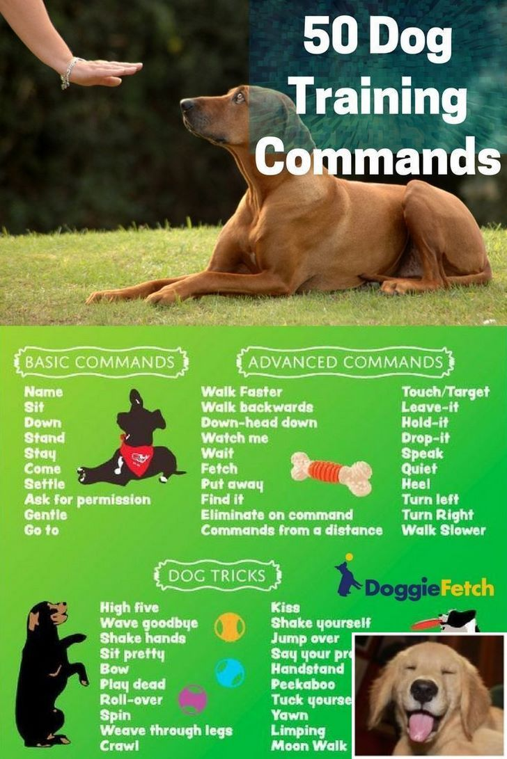 Stop Dog Jumping And Diy Snuffle Mat For Dogs Check The Pic For
