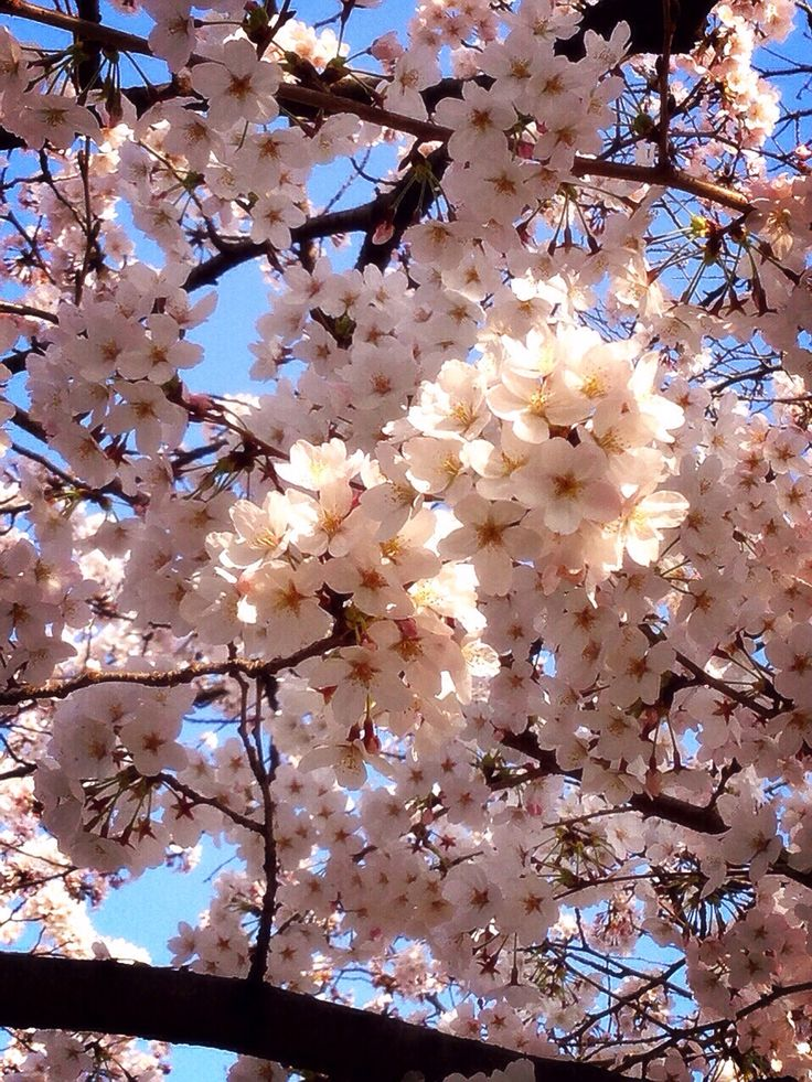This phto was taken by myself in Kyoto on March 31., 2015.
