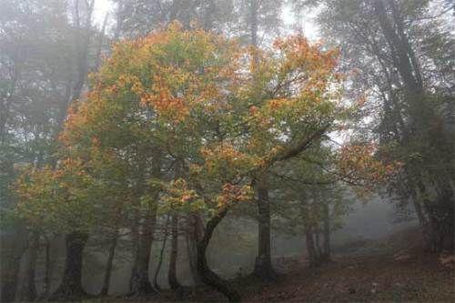 Bosque de Hormas. Sierra de Riaño