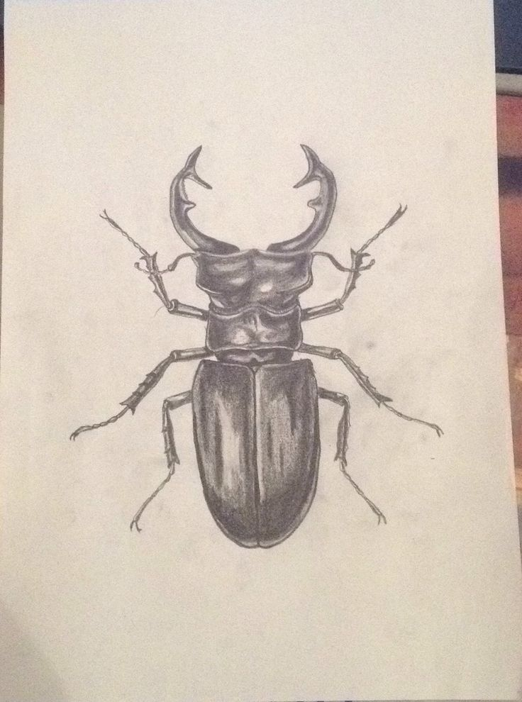 Stag Bug