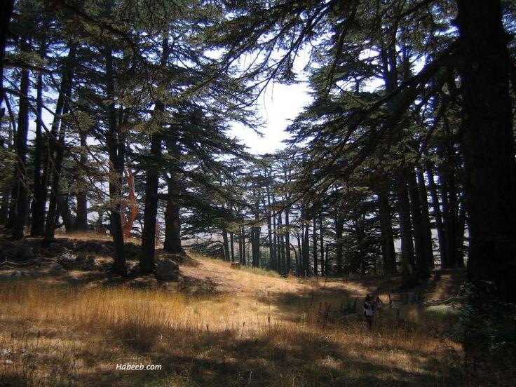 Cedars Of Lebanon ~ Cedars of lebanon places i ve been pinterest google