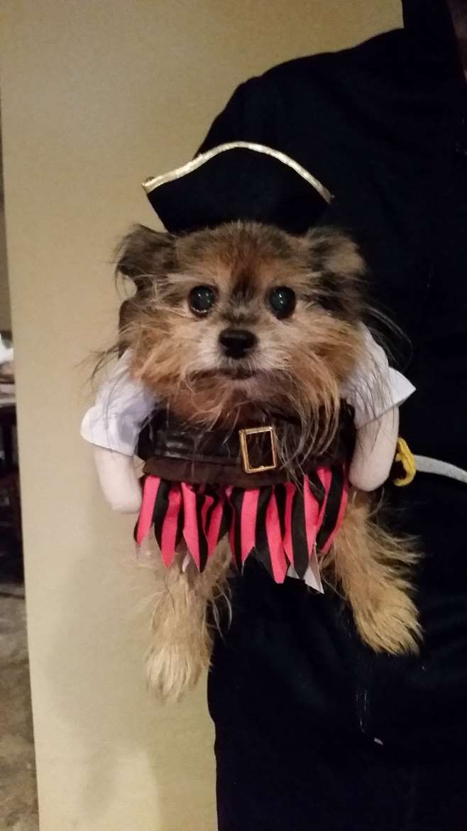 Check Out Swashbuckler Cricket Pet Costume Contest With