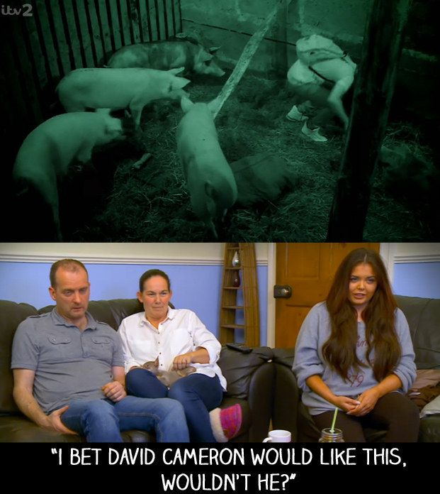 """And when pigs were involved in a challenge during the ITV2 gameshow Release the Hounds. 