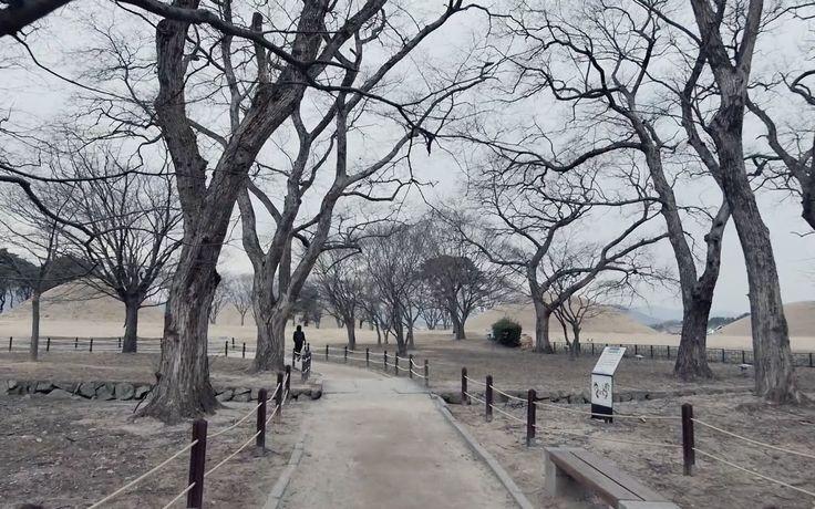 Beholder DS1 at Gyeongju Gyerim Forest, KOREA/경주 계림/GH4
