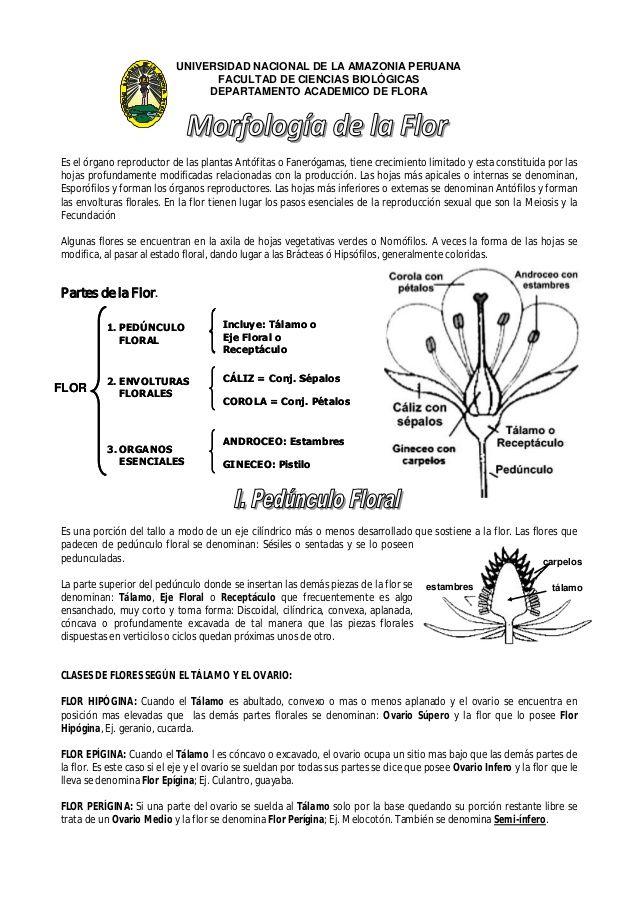UNIVERSIDAD NACIONAL DE LA AMAZONIA PERUANA  FACULTAD DE CIENCIAS BIOLÓGICAS  DEPARTAMENTO ACADEMICO DE FLORA  Es el órgano r...