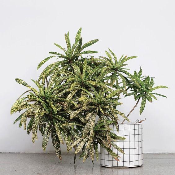 flowerpots large/ grille - FOR.REST -