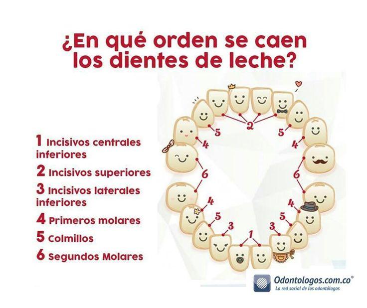 1000 images about salud oral on pinterest for Suelo que se me caen los dientes