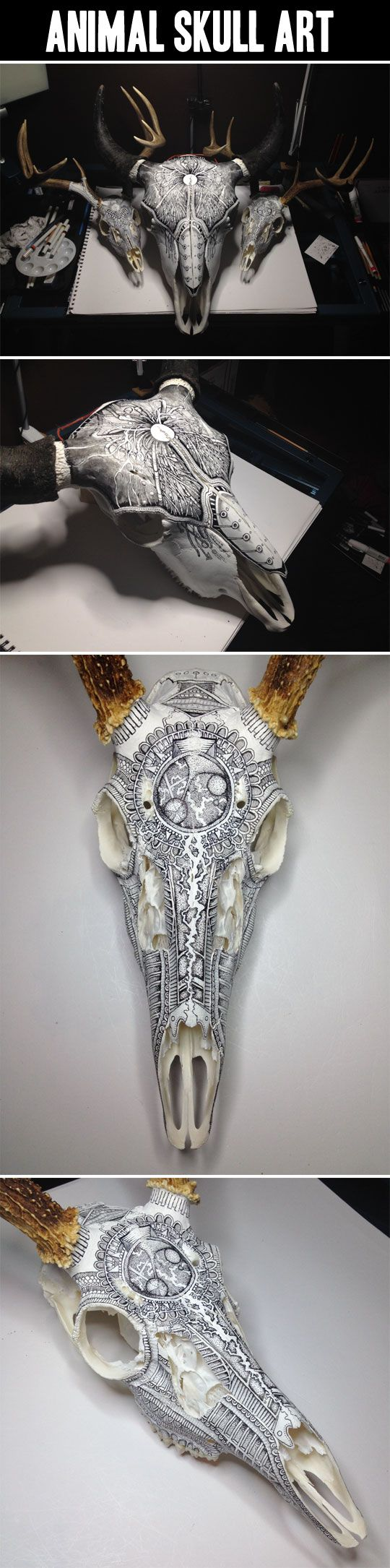Animal Skull Art… i usually hate the dead animals on the wall thing but these are cool
