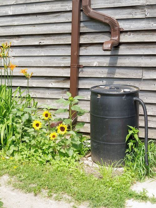 Collecting Rainwater Is An Easy Way To Water Plants Without Increasing Your  Water Bill