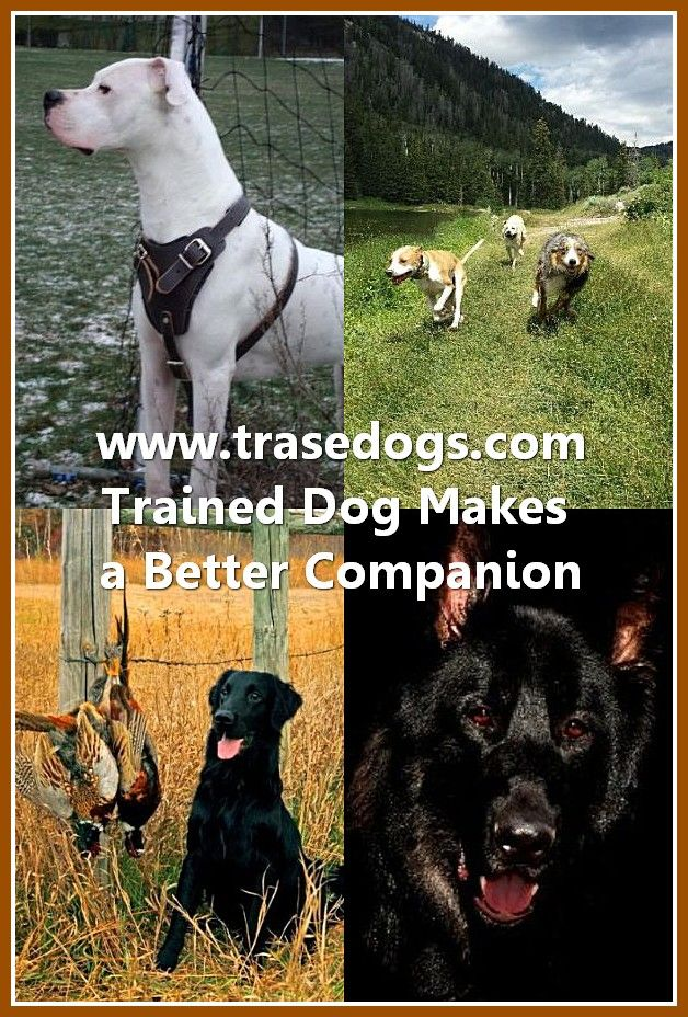 Talking About Dog Dogs Best Dog Shampoo All Dogs